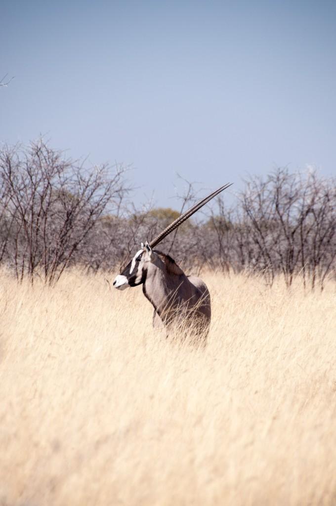 Namibia 2012-363